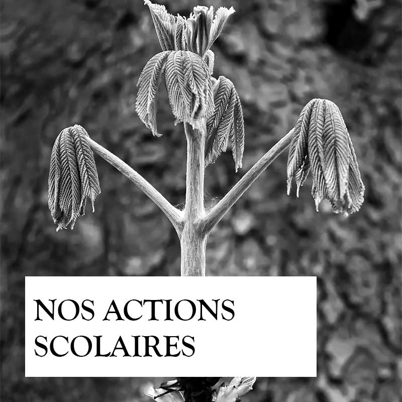 nos-actions-scolaires